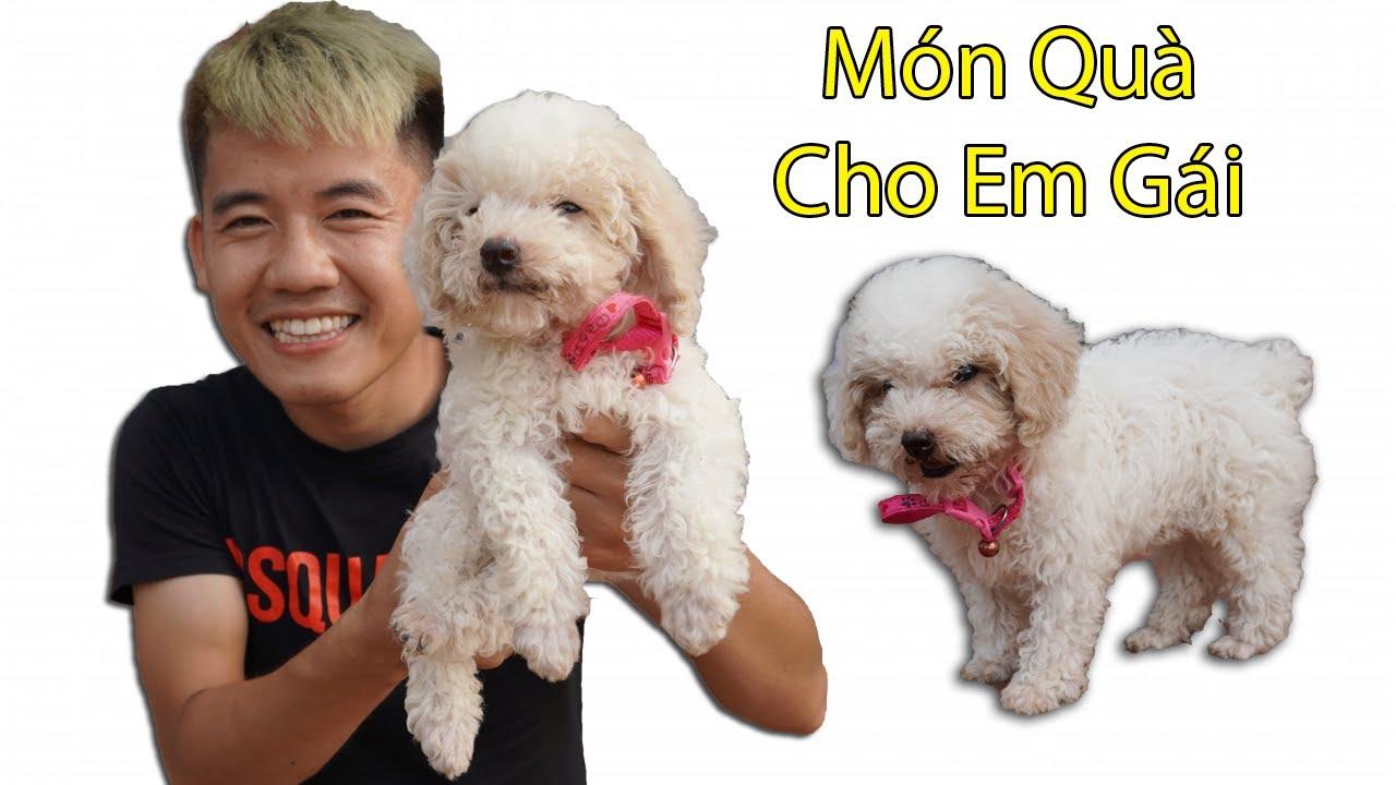 Hưng Troll | Đón Cún Poodle Siêu Cute Về Tặng Em Gái Đoàn Tụ Với Gia Đình Ngáo Ngơ