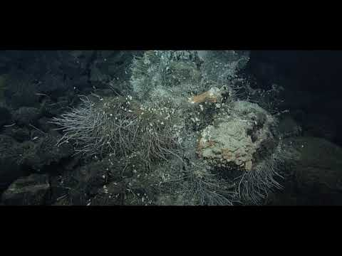 Exploring the Deep Sea:  Hydrothermal Vents of the Offshore Pacific