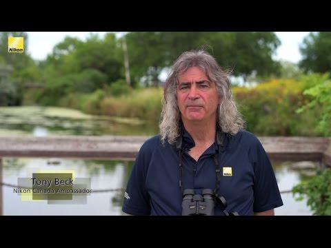 Nikon Monarch 7 8x42 Review