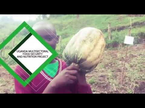 Uganda Multi-sectoral Food Security and Nutrition Project ...