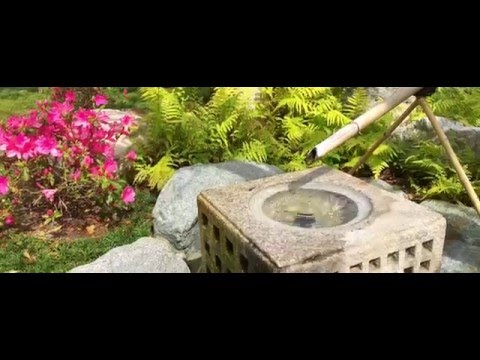 Japanese Friendship Garden | Balboa Park | Cherry Blossoms 2016