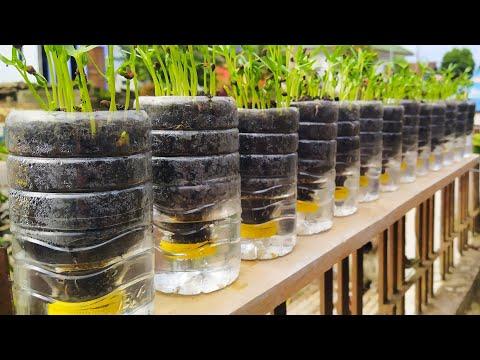 Utilize Plastic Waste For Gardening