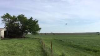Crop duster with barnyard calves 5-13-15