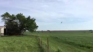 Crop duster with barnyard calves 5-13-15
