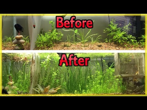 CHEAPEST WAY TO FERTILIZE YOUR  PLANTED AQUARIUM (DIY ROOT TABS!)