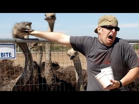 Nothing cheers you up more than funny animals - Funny animal compilation