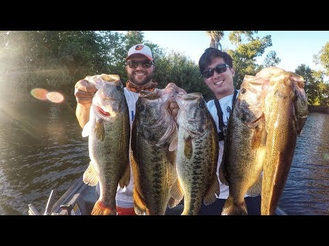 Love Topwater? WATCH THIS