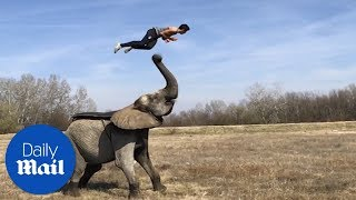 Man runs up elephant's trunk and flips onto its back - Daily Mail