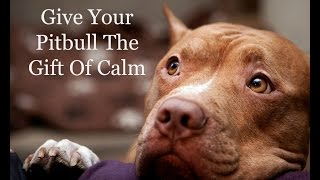Separation Anxiety in PitBulls | What to Do and What Not to Do | Pit Bull Separation Anxiety