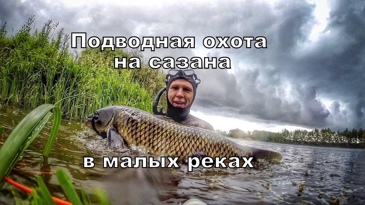 Подводная охота на сазана. Лето 2019, на малых реках.