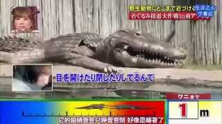 Japan TV Dress Like a Crocs