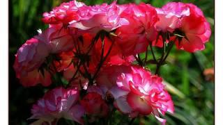 Красивый клип и цветы онлайн