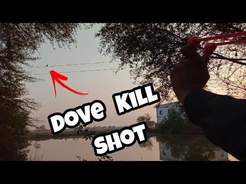Dove Kill Shot | SlingShot Hunting | GZK_SLINGSHOT | Taseer Hunting