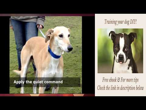 how-to-stop-dog-from-crazy-barking