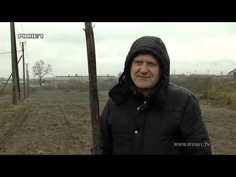 TVRivne1 / Рівне 1: Двадцятиметрові дерева які виростають за п'ять років, вже вирощує фермер з Рівненщини