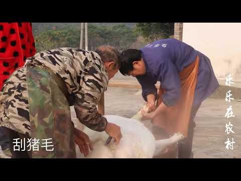 70岁姑爹帮忙杀300斤年猪,上集