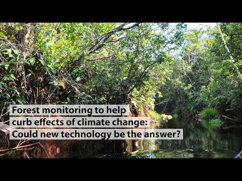 Forest monitoring to help curb effects of climate change: Could new technology be the answer?