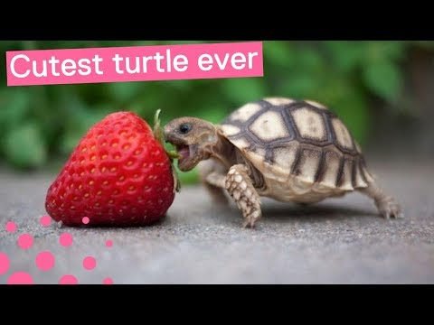 Is This The Cutest Baby Turtle Ever Youtube