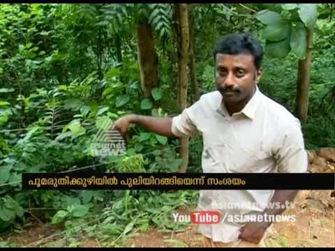 Leopard Presence In Konni Pathanamthitta | FIR 3 Jul 2017