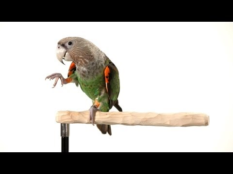 How to Teach Your Parrot to Wave | Parrot Training