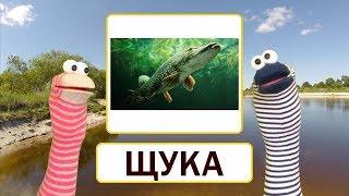 Урок 44. Букварь - Буква Щ. Русский алфавит. Азбука - обучение чтению. Учимся читать.