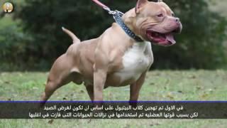 10 حقائق مخيفة عن كلاب البيتبول Video