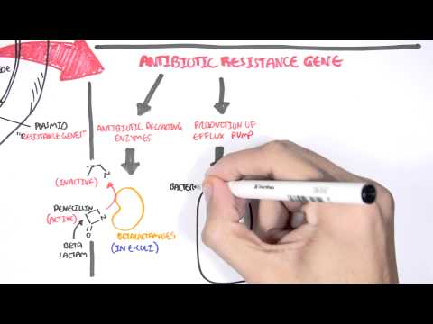 Microbiology – Bacteria Antibiotic Resistance
