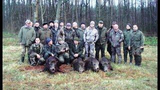 Охота на кабана с Русской пегой гончей
