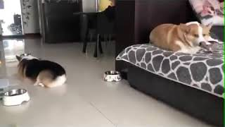 Cats and dogs funny video