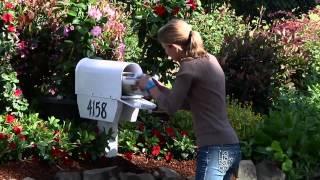 Create A Mailbox Garden With Sun Parasol Mandevillas