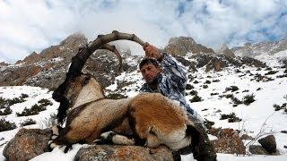 bezoar ibex hunting, Gursel Cataltepe, Recep Ecer