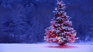 Christmas Trap 2016 (Rockin