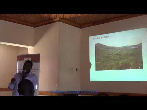 Updates on Banana Bacterial Wilt Research in Uganda