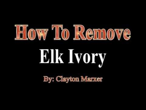 HOW TO REMOVE ELK IVORY -- The Easy Way