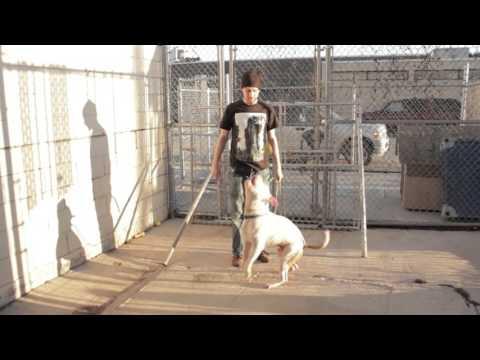 Posh Pets Video I