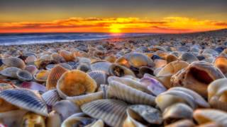 Seashells - Break of Dawn (Franky Fonell and Chris Reece Mix)