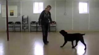 How To Begin E-collar Conditioning With Your Dog.