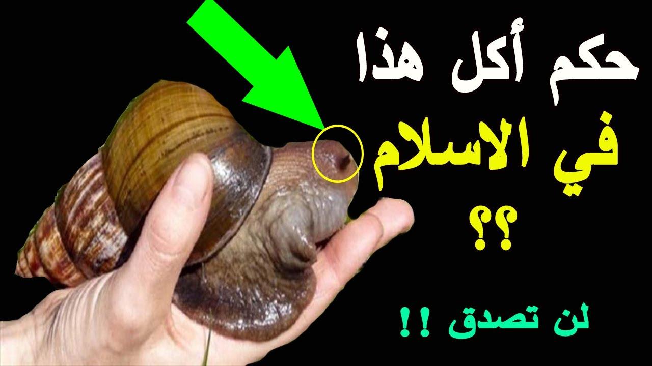 هل تعلم ما هو حكم أكل الحلزون في الاسلام وماذا يحدث لمن يأكله Youtube