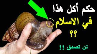 هل تعلم ما هو حكم أكل الحلزون في الاسلام وماذا يحدث لمن يأكله ؟