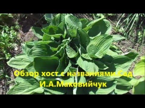 Обзор хост с названиями.Сад И.А.Маковийчук.