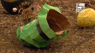 Cheetahs Irish Themed 3rd Birthday Party - Cincinnati Zoo
