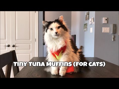 How to make Tiny Tuna Cakes (for cats)