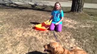 How To Make A Dog Sled