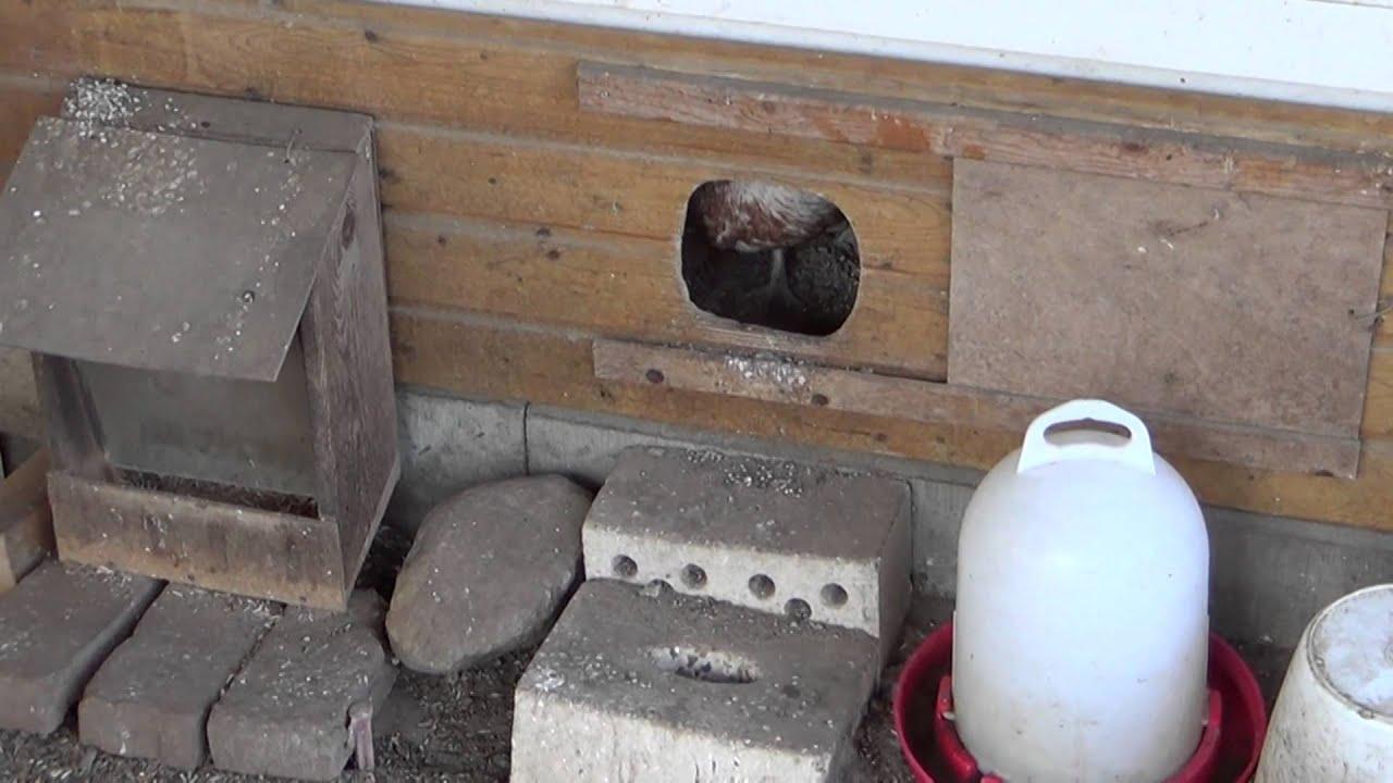 Hühner im Garten Artikelbild