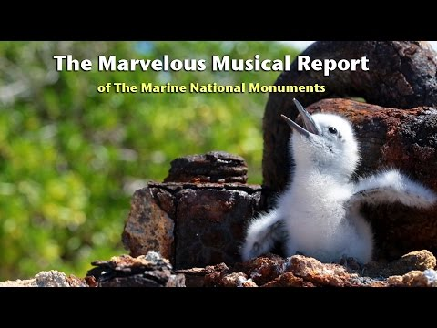The Marvelous Musical Report of the Marine National Monuments