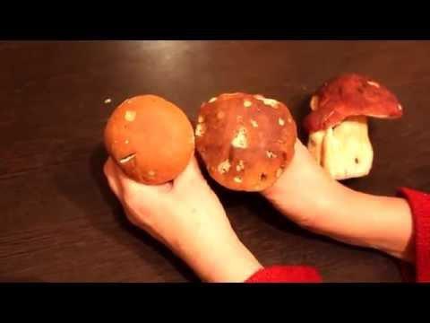 Три формы одной радости! Сравнение берёзового, елового, соснового белого гриба.