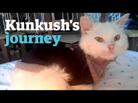 The epic journey of a refugee cat to find its family