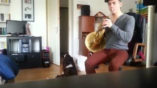 Dog English Springer Spaniel Singing On Frenchhorn