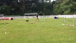 "Molly 12-year Old Cairn Terrier Standard Nadac Run ""california"" 6-21-2015"