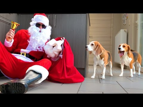 Dogs Vs Bad Santa Prank : Funny Dogs Louie and Marie